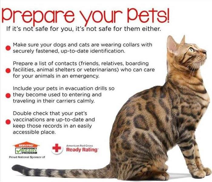 Tips for pet rescue during a fire